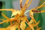 Orchidée #8